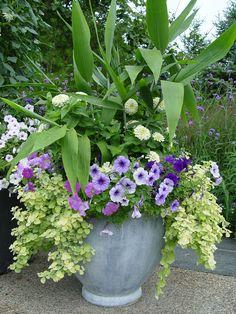 Container Idea: white zinnias, 3 shades Petunias and trailing?