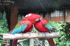 Bird in  Taman Safari Indonesia.