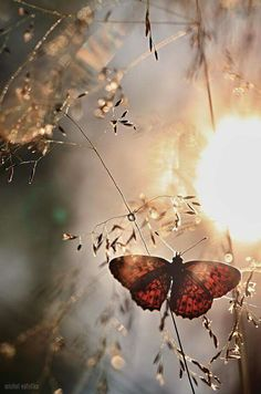 du soleil dans les champs 小 light at end of tunnel by michal vařečka on / spring summer papillon butterfly champs fields Beautiful Butterflies, Belle Photo, Pretty Pictures, Beautiful World, Beautiful Creatures, Nature Photography, Photography Poses, Scenery, Images