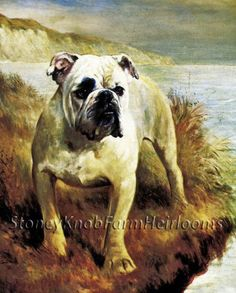 Standing Firm Bulldog ~ Dogs ~ Lilian Cheviot ~ Counted Cross Stitch Pattern #StoneyKnobFarmHeirlooms #CountedCrossStitch