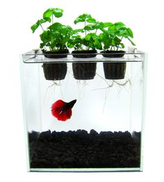 Self Contained Aquaponics Kit Betta Fish Aquarium Herb Garden