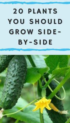 Vegetable Garden Tips, Container Gardening Vegetables, Veg Garden, Garden Care, Edible Garden, Lush Garden, Garden Pests, Spring Projects, Garden Projects