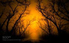 light 14 by wmourad364. @go4fotos