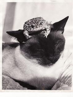 My very tolerant siamese cat,  Mai Tai.  RIP sweet girl! Picture taken 1985,