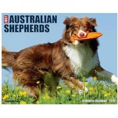 Just Australian Shepherds 2015 Calendar $11.99