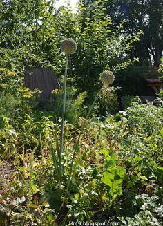 Ideen Gartendusche Design Erfrischung Minimalist | Die 65 Besten Bilder Von Gartendusche Outside Showers Outdoor