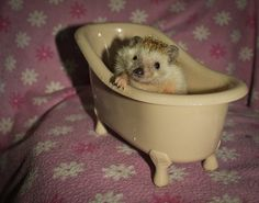 Juanita y su bañera