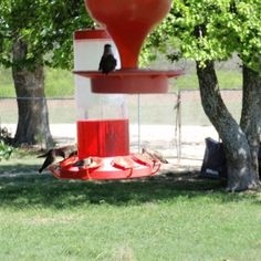 Keeping Ants Out of the Hummingbird Feeder   ThriftyFun