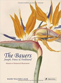 The Bauers: Joseph, Franz & Ferdinand: Masters of Botanical Illustration: Hans Walter Lack: 9783791354897: Amazon.com: Books