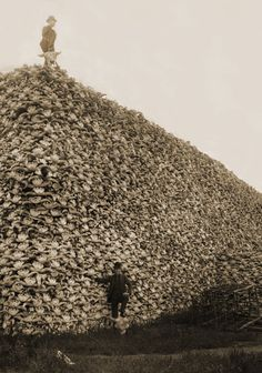 A pile of buffalo skulls; the US government tries to kill off the Indian's food supply.