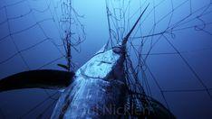 Stop the needless slaughter of marine wildlife by the California driftnet fishery