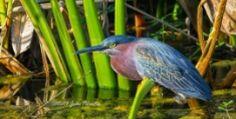 Butifull birds