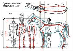 пропорции лошади: 20 тыс изображений найдено в Яндекс.Картинках