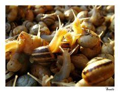 Snail invasion!! Snails by cavallo13 on deviantART