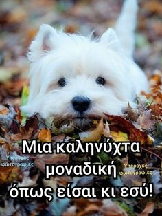 Greek Quotes, Greek Sayings, Eternal Salvation, Luke 17, In Everything Give Thanks, 1 Thessalonians 5, Thank You Lord, Good Night Quotes, Animal Quotes