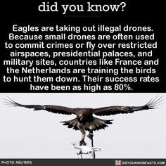 Eagles were already badass but this is #eagles #amazing #birds #drone Download our free App: [LINK IN BIO]