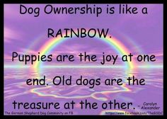 Dog ownership is like a rainbow. Puppies are the joy at one end. Old dogs are… I Love Dogs, Puppy Love, Cute Dogs, Dog Rules, Pet Loss, Animal Quotes, Animal Funnies, Old Dogs, Pet Memorials