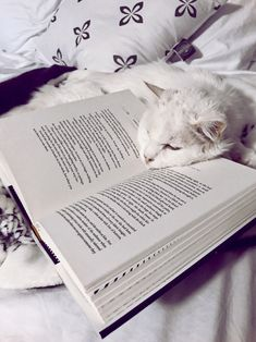 This looks like a nice place to sleep. Cat Behavior Problems, Animals And Pets, Cute Animals, Schrodingers Cat, Baby Kittens, Cat Quotes, Funny Animal Pictures, Book Photography, Cat Breeds