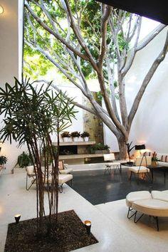 indoor, in-ground trees