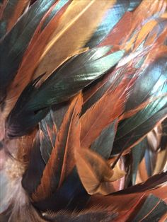 Natural hackle feathers