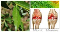 Remedio con Artrosis