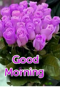 Good Night Flowers, Good Morning Images Flowers, Good Morning Roses, Good Morning Cards, Good Morning Happy, Good Morning Coffee, Good Morning Greetings, Morning Messages, Happy Saturday