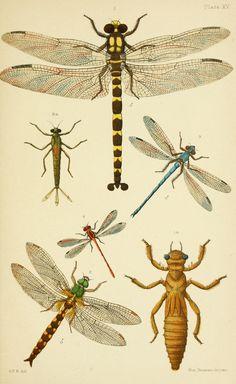 An elementary manual of New Zealand entomology