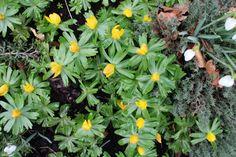 forår i haven - det er de første vitaminer for øjnene... just love it.