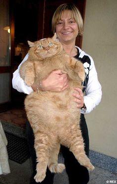 Holy cat!