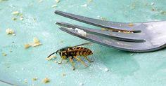 Den Sommer in Ruhe auf Terrasse oder im Garten genießen? Wenn die Wespen stören, musst du nicht gleich zur Falle greifen. Diese Tricks halten Wespen fern!