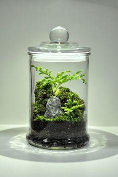 #Moss #Terrariums https://www.instagram.com/terrapod/