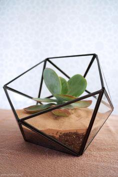 DIY faceted terrarium tutorial | Cómo hacer un terrario | casahaus.net