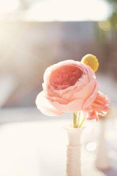 English tea roses. L