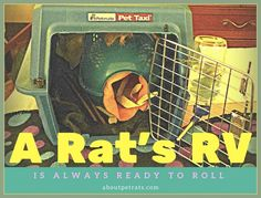 A Rat's RV is always ready to roll Cat carriers are perfect for transporting your pet rats. They also work well for temporary housing such as while you're cleaning their cage. http://amzn.to/2chlybu When you purchase through this link About Pet Rats receives a small commission at no extra cost to you. Your support is greatly appreciated!