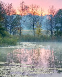 Pastel #Sunrise lake and forest