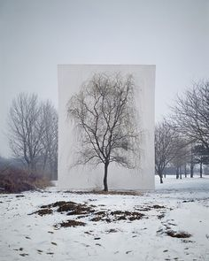 """Myoung Ho Lee - Tree #3, 2006  From the series Tree"""