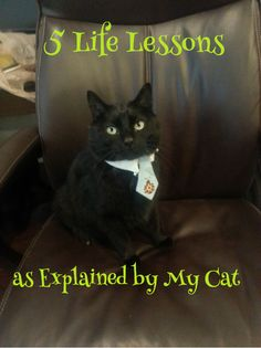 5 Life Lessons as Explained by My Cat | Gone Catawampus