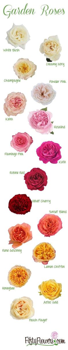 What kind of garden roses do you love mostt? Fiftyflowers.com breaks it down with this chart of all the most beautiful garden roses.