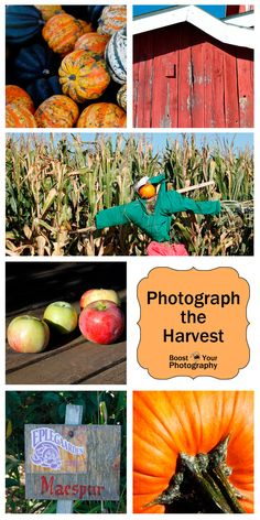 Local Tourism: Photograph the Harvest | Boost Your Photography