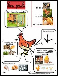poule plus lots of other animals at the site Kindergarten Activities, Science Activities, Activities For Kids, French Teacher, Teaching French, Science For Kids, Science And Nature, Early Learning, Kids Learning
