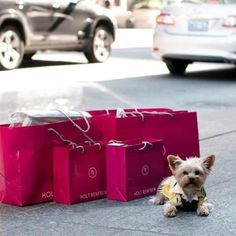 Yorky in front of Holt Renfrew waiting for valet Shopping Day, Shopping Spree, Rose Fushia, Pink, Magenta, Holt Renfrew, Yorky, Moving To Paris, Shop Till You Drop