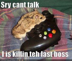 funny+hamsters+with+captions+3.jpg (500×431)