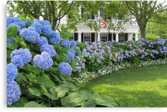 Easily change the color of your hydrangea flowers by changing the soil's Ph. Check these details of how to change hydrangea colors and enjoy the color show! Hydrangea Landscaping, Home Landscaping, Front Yard Landscaping, Front Yard Decor, Farmhouse Landscaping, Front Porch, Hydrangea Care, Blue Hydrangea, Hydrangeas