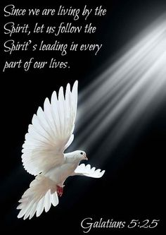 """""""If we live in the Spirit, let us also walk in the Spirit."""". Galatians 5:25"""