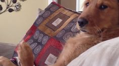 If you've had one of those days where you feel like you're up against it, take comfort in the fact that at least your own limbs aren't trying to attack you.This golden retriever puppy can barely contain an unruly paw in this clip from AFV Animals — it's just lucky it's got three others to help fight it off.Click through for more golden retriever goodness, including a clever cloning trick.Follow ninemsn on Facebook and Twitter for more trending stories and viral videos.