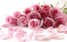 Delicate Beautiful Light Pink Roses Wallpaper