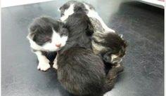 Tre gattini appena nati salvati da un tombino