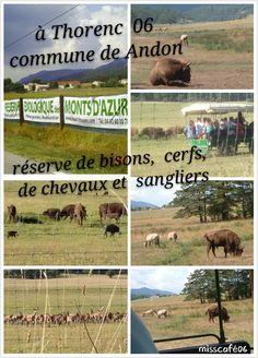 dans la commune de Andon à Thorenc 06 à 1h du bord de mer Vous pourrez en calèche visiter la réserve de bisons, de cerfs, de chevaux sauvages et de sangliers.