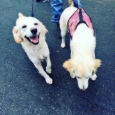 En ADOPCIÓN estas perritas necesitan ser adoptada en niestro perfil de Twitter @place_ok están los datos del contacto Help!!!#ñ  www.placeok.com  #diadelamascota #losanimalesmeimportan #doglovers #dogs #dogfriends #dogfriendship #dogadoption