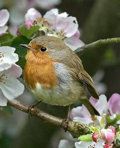 Adorable little bird!